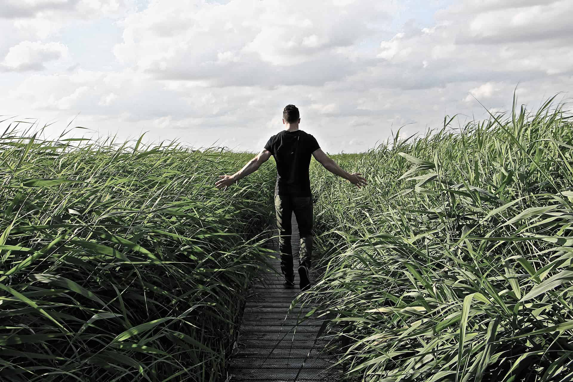This man can walk through the tall grass free from worry because o CASAC and addictions counslor Online training and renewal